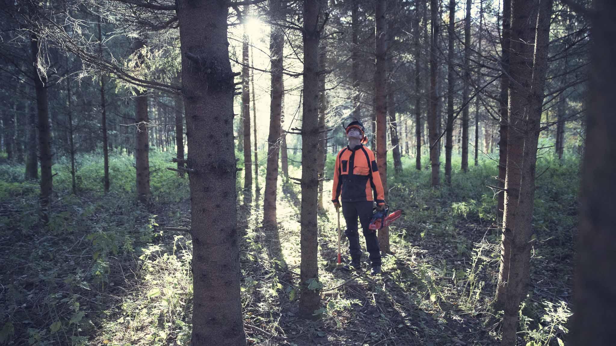 Teamevent-Bäume fällen Bild2