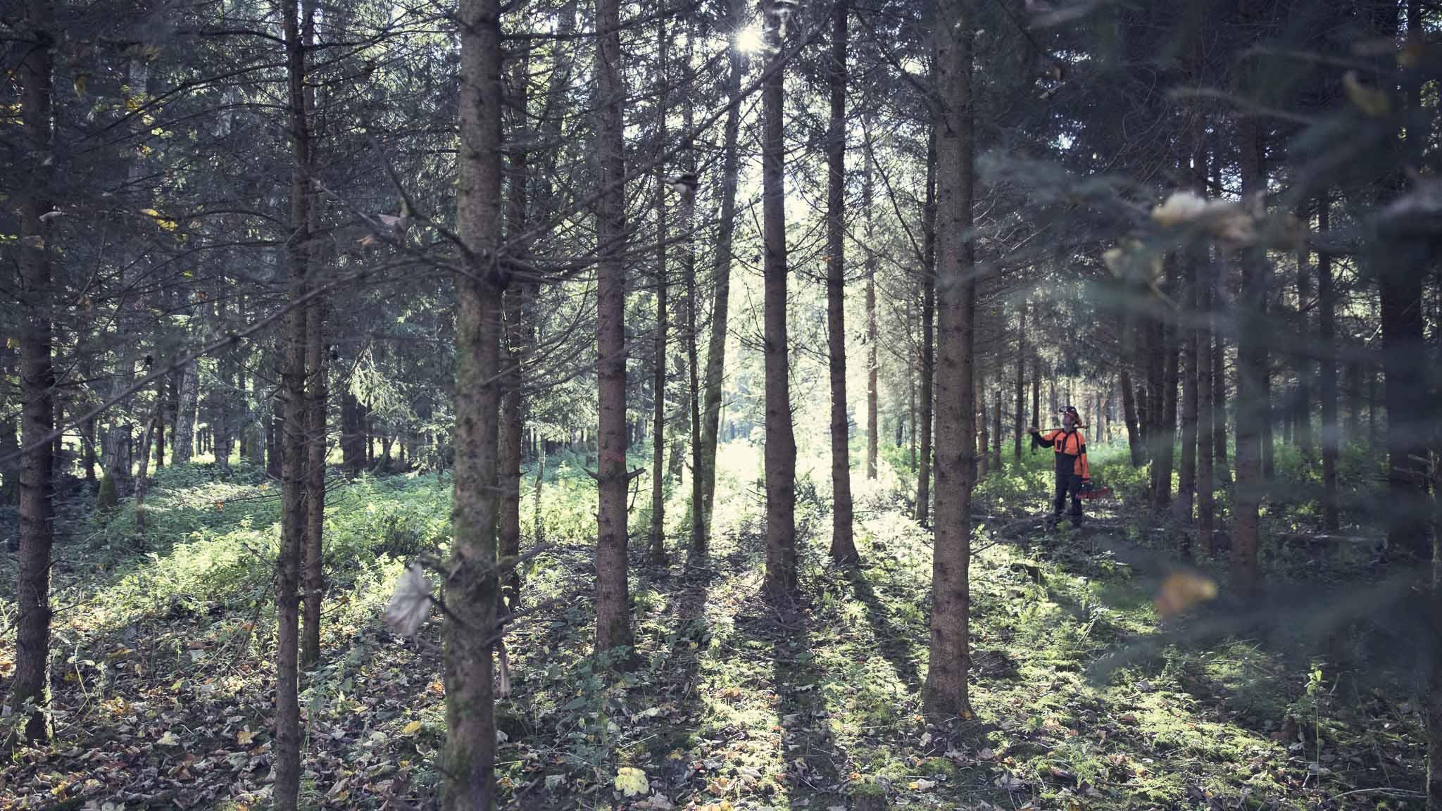Teamevent-Bäume fällen-Bild6